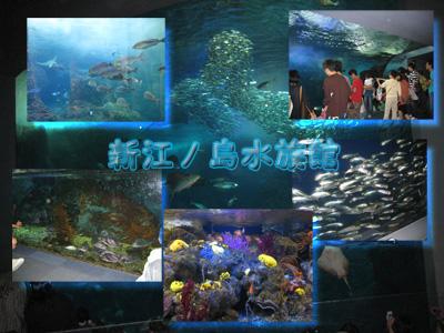 江の水2.jpg