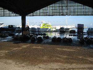 銚子漁港_01.jpg