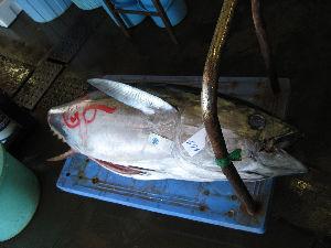 銚子漁港_08.jpg